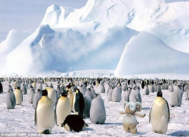 Elefante de pelúcia com pinguins na Antártida (Foto: Reprodução)