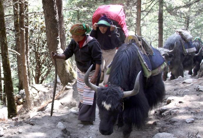 Jane von Sydow expedição Everest (Foto: Arquivo pessoal)