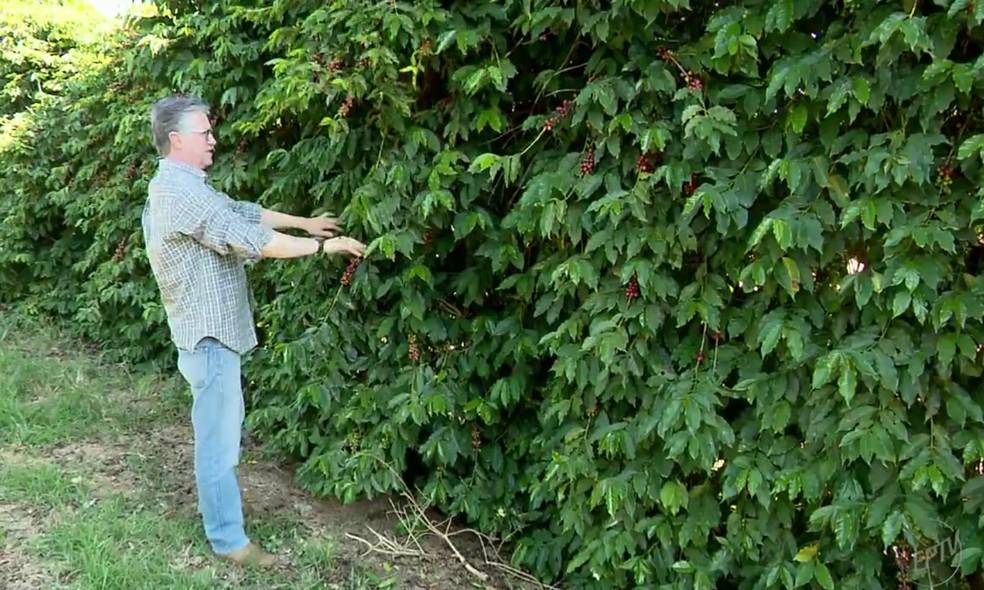 Segundo especialistas, têm aumentado o número de empresas de olho em exportação de café (Foto: Reprodução EPTV)