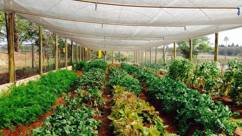 organicos_estufa_sucos_detox (Foto: Divulgação/Urban Remedy)