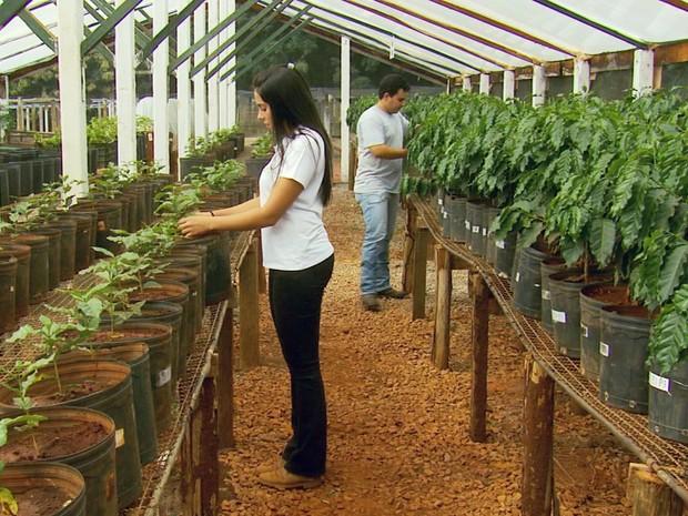 Pesquisa da Ufla usa hidrogel para reter água em plantas durante estiagem, Lavras, MG (Foto: Reprodução EPTV)