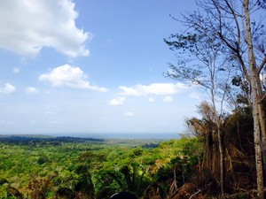 Floresta Nacional do Tapajós e as praias também serão alvos das ações do Museu (Foto: Adonias Silva/G1)