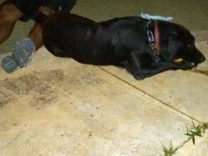 Cão se deita ao lado do corpo do dono, que morreu durante passeio no DF (Foto: Polícia Militar/Divulgação)