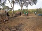 Operação combate desmatamento em cidades do Norte de Minas