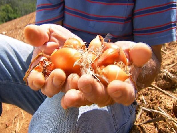Município quer de volta o título de grande produtor de cebolas (Foto: Reprodução / TV TEM)