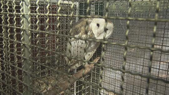 Superlotado, Centro de Reabilitação de Aves de Araras requer ampliação