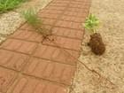 Árvores são arrancadas por vândalos pela terceira vez em um mês no PR