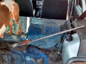Cães e as armas estavam em um Fiat Uno (Foto: Polícia Ambiental/Cedida)