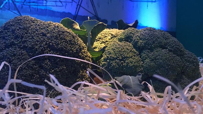 brócolis-atibaia-sp (Foto: Viviane Taguchi)