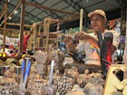 Vendedores esperam aumento de lucros durante o final da Expoacre