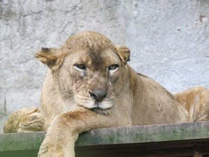 Animal ficou mais dócil com o tempo (Foto: Anna Gabriela Ribeiro / G1)
