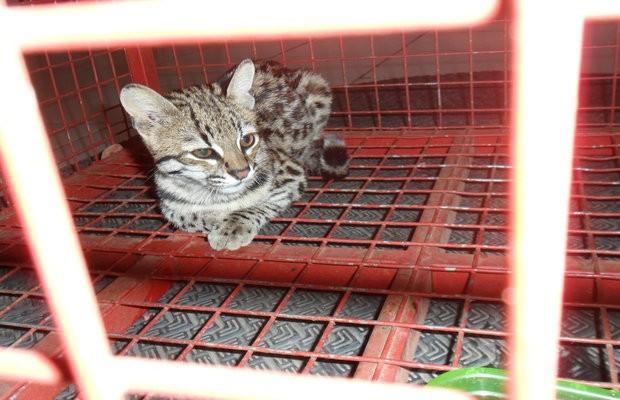 Animal foi encontrado dentro de um guarda-roupas, em Goianésia (Foto: Divulgação/Corpo de Bombeiros)