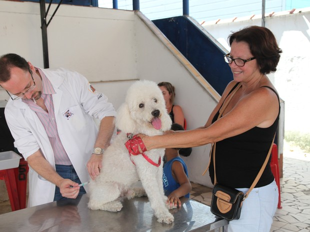 Cães e gatos foram vacinados durante a campanha (Foto: Marcelo Martins/Prefeitura de Santos)