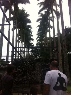 97f46e65b6 Fotos foram colocadas entre palmeiras imperiais (Foto  Isabela Marinho  G1)