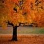 Papel de Parede: Autumn Season