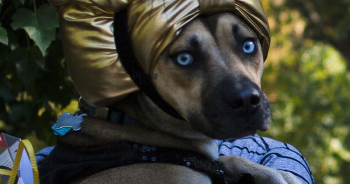 Nova York tem desfile canino de Halloween
