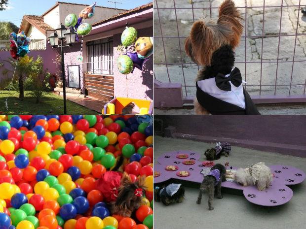 Pet shop de Curitiba organiza festa com duas horas de duração para até dez cachorros (Foto: Arquivo Pessoal)