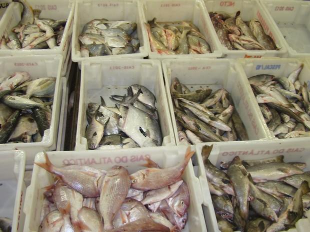 Marinha e Ibama apreendem mais de 80 toneladas de pescado no RS (Foto: Divulgação/Marinha do Brasil)