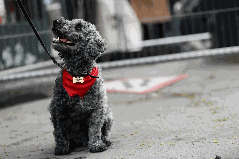 Cão participa de parada do Dia do Trabalhador em Londres (Foto: Stefan Wermuth/Reuters)