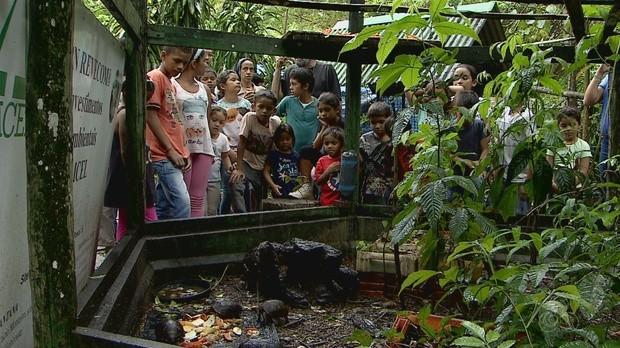 amapá, revecom, bom dia amazônia (Foto: Bom Dia Amazônia)