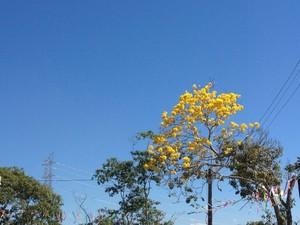 Semana deve começar com forte calor, em RO (Foto: Larissa Matarésio/G1)