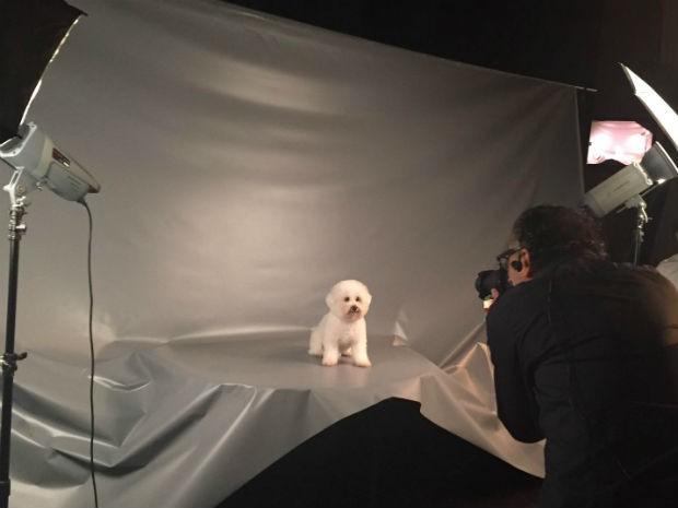 Agência funciona como mediadora entre produtoras e donos de pets (Foto: Divulgação)