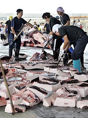 Wada é uma das quatro cidades japonesas que abertamente matam baleias para venda comercial (Foto: Yoshikazu Tsuno/Arquivo AFP)