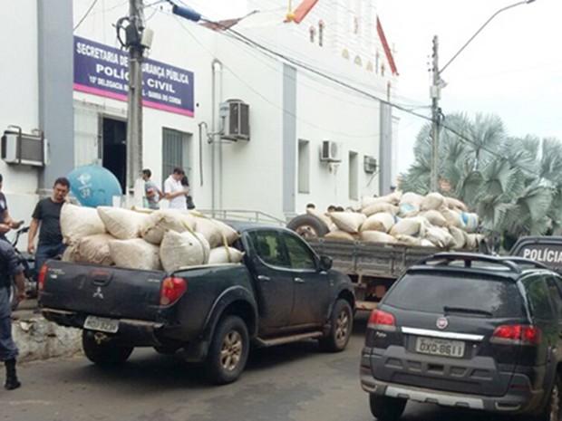 Maconha apreendida pela polícia em aldeira no Maranhão foi levada pra delegacia de Barra do Corda (Foto: Dilvulgação / Polícia)