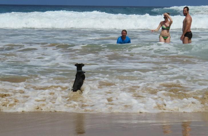 Cão Pablo na praia