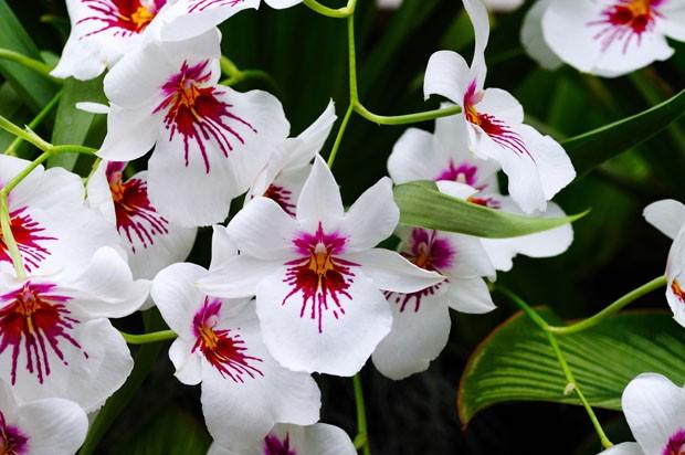 Orquídeas da primavera: descubra quais espécies usar (Foto: Vamos Receber)