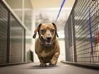 Mais da metade dos cães nos EUA está acima do peso, diz jornal