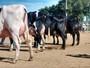 Produção agropecuária demandaria R$ 260 bilhões em financiamento