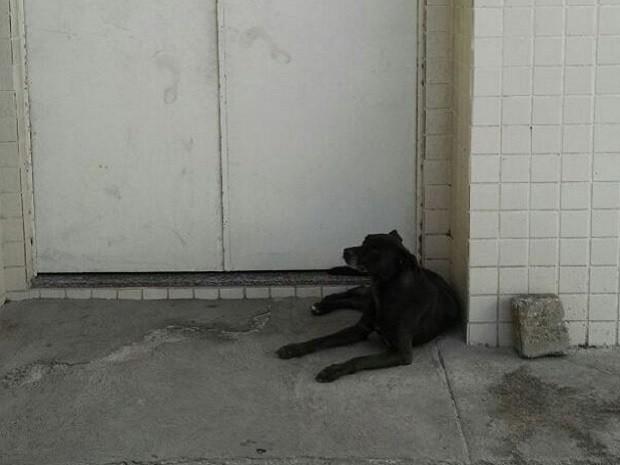 Cão permaneceu em frente à carceragem mesmo depois da saída dos policiais (Foto: Divulgação/Polícia Militar)