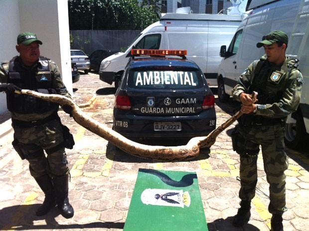 Segundo os guardas que fizeram a captura, cobra mede 2,7 metros de comprimento (Foto: Anderson Barbosa/G1)