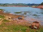 Empresas perdem US$ 2,5 bilhões em 2015 com crise hídrica global