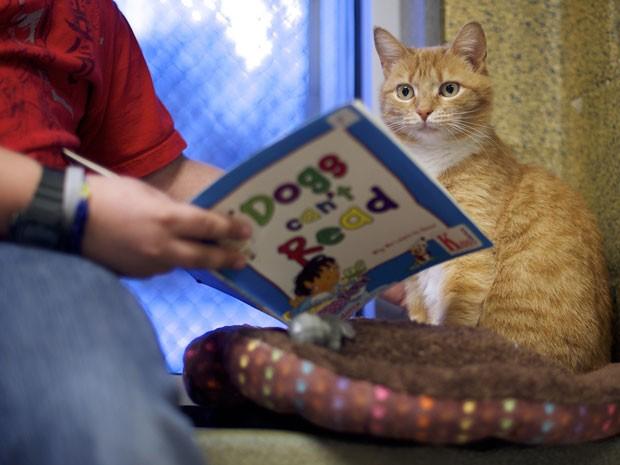Criança mostra livro infantil para um dos gatos do abrigo (Foto: Mark Makela/Reuters)