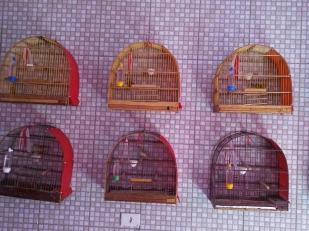 Aves eram mantidas em gaiolas pelo morador da residência (Foto: Divulgação/Polícia Ambiental)