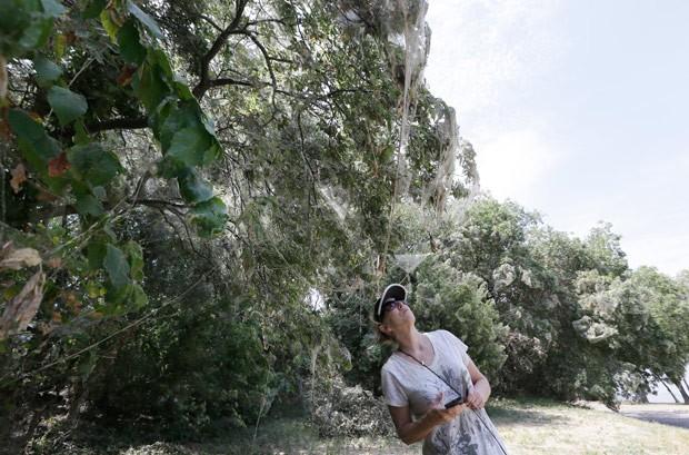 Moradores de Rowlett, no estado do Texasx (EUA), se surpreenderam ao encontrar árvores do parque Lakeside cobertas por teias de aranhas (Foto: LM Otero/AP)