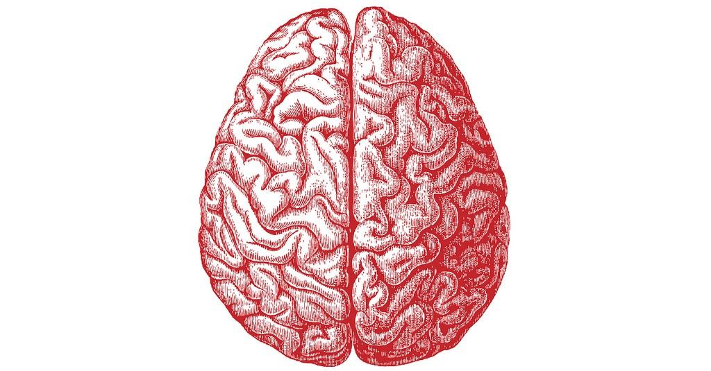 """Dobras do cérebro economizam """"espaço"""" na caixa craniana (Foto: Flickr / Allan Ajifo / modup.net)"""