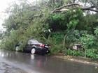 Árvore cai sobre carro e rua é coberta por lama durante chuva em Bauru