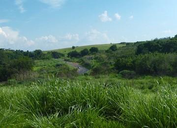 Terreno do Guarani, às margens da Rodovia dos Bandeirantes (Foto: Reprodução/ EPTV)