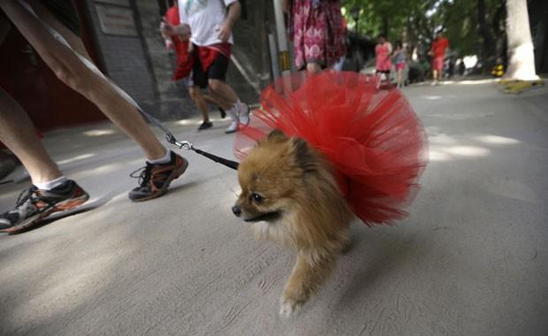 Cachorro usa saiote e também corre de vermelho no evento beneficente ocorrido neste Dia das mães (Foto: Jason Lee/Reuters)