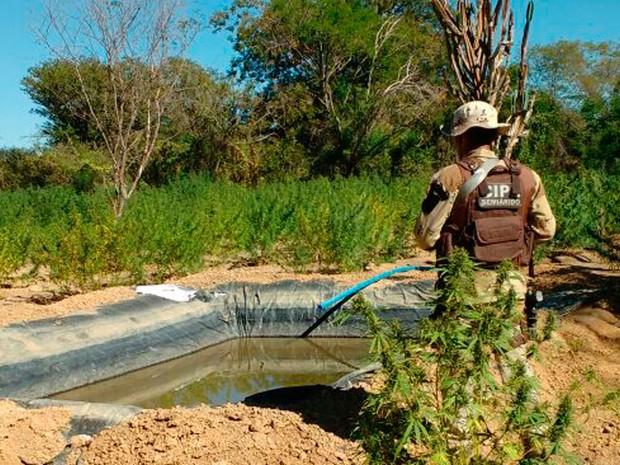 Sistema de irrigação foi descoberto pela polícia (Foto: Divulgação/Polícia Militar)