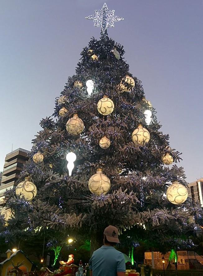 Árvore de Natal da Praça do Papa (Foto: Divulgação)