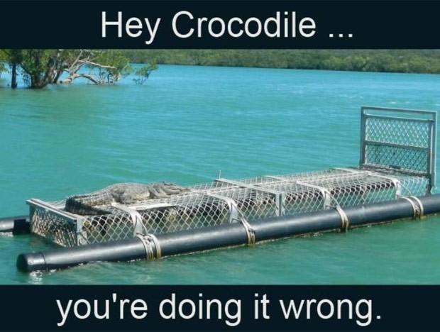 Policiais criaram o meme 'Ei, crocodilo, você está fazendo isso errado' (Foto: Reprodução/Facebook/Northern Territory Police Force)