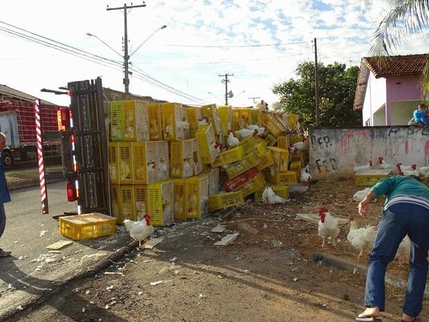 Caminhão com frangos vivos tombou no distrito de Pompéia (Foto: Marquinhos Luiz/Visão Notícias)