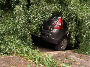 Carro é atingido após queda de árvore em Salvador (Foto: Imagem/TV Bahia)