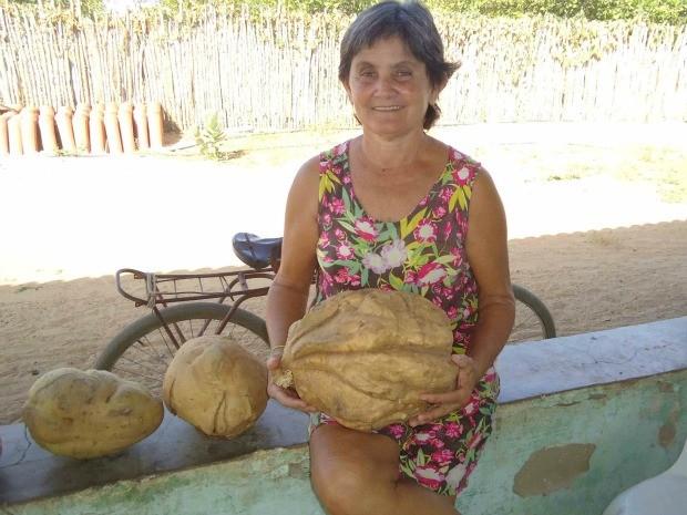 A maior das sete batatas com peso acima do normal tem nove quilos  (Foto: Maria/ VC no G1)