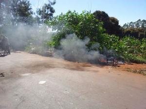 Eles também colocaram fogo em galhos de árvore  (Foto: Giliardy Freitas/ TV TEM)