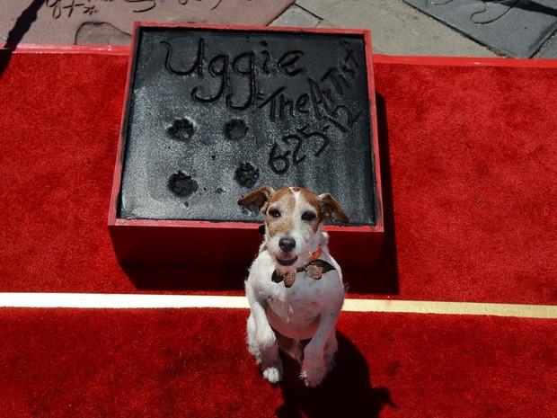 Cachorro Uggie, de 'O artista', ganha estrela na calçada da fama. Cão foi homenageado em Hollywood nesta segunda-feira (25). (Foto: Robyn Beck/AFP)